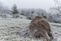 Z16_3996 LT (Zoran Babich) Tags: zagreb cityofzagreb croatia hr winter frost hrvatska