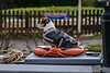 Playing It Safe (Alastair J Lofthouse LRPS) Tags: rickmondsworth rps amersham dog 2016 grandunioncanal canal december water lock