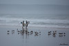 Surfers and seagulls in a foggy morning... (JOAO DE BARROS) Tags: surf surfers beach waves sports seagull barros joão fontedatelha