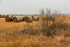 Cold Kansas Hay Bales (thefisch1) Tags: hay bales pasture kansas cold winter scene weed sky dismal round large