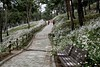S16_1561 (Daegeon Shin) Tags: nikon d4 nikkor 55mm 55mmf28 flower flor way camino road passer transeúnte bench banco chrysanthemum crisantemo 니콘 꽃 꽃밭 길 행인 벤치 의자 구절초 corea korea 전북 정읍