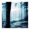 woodenscars (seba0815) Tags: ricohgrdiv grdiv blue bleachbypass tree woods walk icm blurred moved blur woodenscars light square nature color mood seba0815