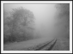 track into forest (Andrew C Wallace) Tags: deepforest mist fog rain mountain domdomsaddle trees victoria australia ir infrared olympusomdem5 microfourthirds m43 blackandwhite bw