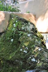 DSC_5428 (Nikolay.Shulga) Tags: franklloydwright fallingwater 20130718fallingwater