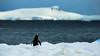 ANTARCTICA // preview from my journey (L'inspiration vient en expirant) Tags: antarctica antarctic austral manchot penguin ice snow mountains ocean glacial journey ship kruzefahrten