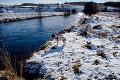 Considering (Barry Folan) Tags: spey speyside river cocker cockers cockerspaniel dogs salmonriver whiskyriver landscape pentaxart pentax pentaxk1 scotland highlands