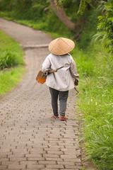 IMG_4386 (FelipeDiazCelery) Tags: indonesia bali asia arroz rice ricefields composdearroz agricultura griculture wrok worker trabajdor granjero granja farm farmer
