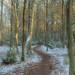 kampinos-DSC_0373 (Marek7) Tags: forest path tree national park kampinos nature poland