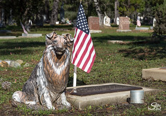 Ever Faithful (Selkii's Photos) Tags: animals california cambria cambriacemetery cemetery dogs mammels unitedstates us