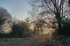 When the silence ignites your mind (OR_U) Tags: 2017 oru uk surrey hersham hershamriversidepark morning walk path tree sunshine sun winter cold park sunrise mobilephotography