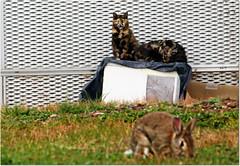 Friends 🐈🐇 (Simply Viola) Tags: hospitallegnano animals cats rabit ospedalelegnano animali gatti coniglio