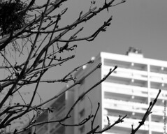 De sève et de beton (Fontenay-sous-Bois Officiel FRANCE) Tags: fontenay fontenaysousbois regionparisienne valdemarne iledefrance 94 94120 paris france nid fsb nikon nikond300 nb bw arbre tree nest outside exterieur