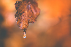 Warmer (matthiasstiefel) Tags: leaf spring warmer ice drop icedrop blatt frühling wärmer eis tropfen eistropfen dof depthoffield