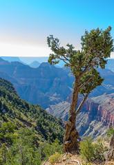 Great Grand Canyon (Lena and Igor) Tags: travel us usa arizona grandcanyon pine tree scenic canyon landscape vista sunlit dslr nikon d7000 nikkor 18300