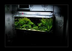 Anglų lietuvių žodynas. Žodis aquatic reiškia a vandens lietuviškai.
