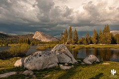 Yosemite National Park (Desert Rat Photography (E.A. Rosen)) Tags: yosemite yosemitenationalpark tuolumne glacierpoint yosemitevalley tuolumnemeadows lembertdome olmsteadpoint cornlily tiogalake