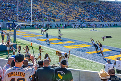 Touchdown !!! (_ Ivor_) Tags: california berkeley football nikon cal cheerleader touchdown gramblingstate collegefootball 18300 calbears 18300mmf3556 d7200 nikond7200