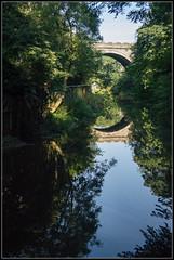 Still Reflection (Donald Noble) Tags: bridge trees light plant reflection tree water river scotland flora edinburgh waterofleith