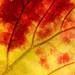 Autumn Colours #1