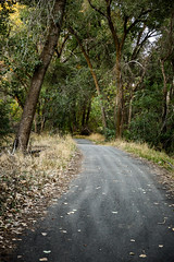 Trailway (O.S. Fisher) Tags: road trees fall leaves forest canon photography utah photo woods path trails photograph mysterious 5d biketrail markiii shaunfisher canon5dmarkiii osfisher olivershaunfisher