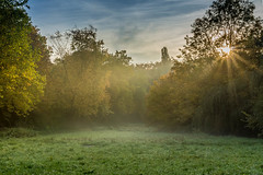 Sunrise in the Park (Fabian Fortmann) Tags: morning autumn sky sun tree nature fog clouds sunrise herbst foggy sonne sonnenaufgang morgen baum hdr sonnenstrahlen