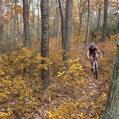 Black Run jaunt  📷 @lonewolfcycling #weavercycleworks #custombicycles #fallcolors #ridethepines