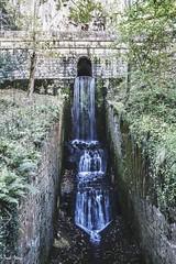 (Irene Ziel Photography) Tags: naturaleza water contrast agua plantas arboles asturias contraste roca cascada covadonga cangas onís
