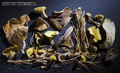 Exotic Dried Mushrooms - The Mushroom Garden, NantMor, Snowdonia (CastleVision Photographic) Tags: food mushroom garden king moonlight dried oyster snowdonia shiitake enoki nameko