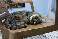 I feel pwetty. (Prathamesh Wadia) Tags: cats cute cateyes cutecat purrfect thatlook sonyrx100m4 rx100iv sonyrx100iv