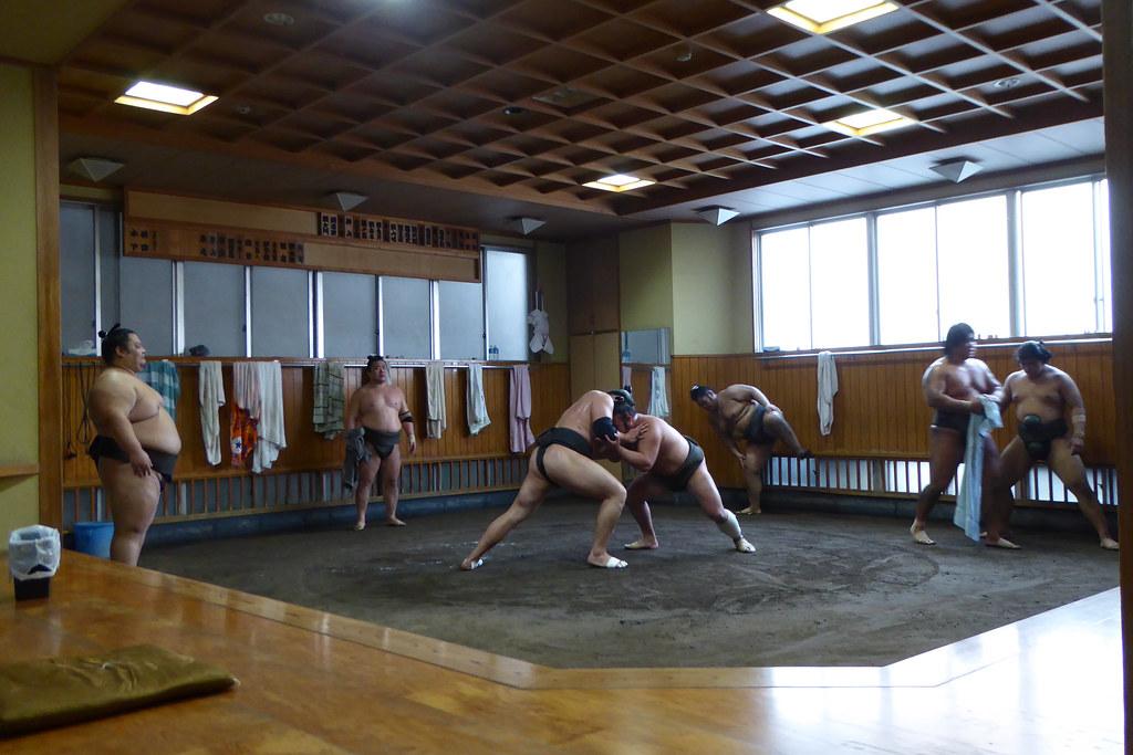 Ready, set, sumo