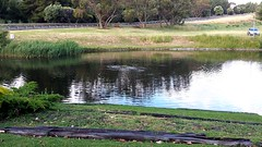 Duck pond at Old Reynella