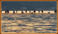 passerella (ANbepLO) Tags: canon eos 40d iseo montisola passerella christo lago nord italia lombardia