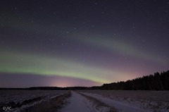 Enjoy the silence (- Man from the North -) Tags: outdoor sky aurora road trees forest night auroraborealis stars finland moonlight silence snow winter longexposure