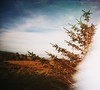 Fir Blur (teaselbrush) Tags: film photography analogue toy camera glitch blur superheadz slim white angel eigg scotland scottish highlands small isles island isle inner hebrides sea ocean nature rural scenery beauty light leak fir tree