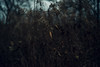 (amy buxton) Tags: amybuxton dark forestpark kennedywoods natural nature nikon50mmf14 stlouis winter dusk