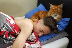 Adolphus Jarhead & His Pet Cat (Stephen Reed) Tags: family europe red sonyrx100iii woking sonyphotographing military ipadair2 ipad maine coon england