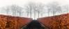 Hedge in the fog. (rudi.verschoren) Tags: hedge rust roest trees lane walkway walk path colors cold belgium brown black endless europe eos europa exposure canon 70d minimalisme landscape landschap leaves lines long outdoor fog mist
