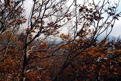 Zavižan (roksoslav) Tags: velebit croatia 2008 nikon d80 sigma18125mm jesen autumn