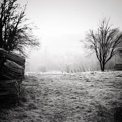 L'hiver en campagne (Nadège Gascon) Tags: brouillard charente black white campagne landscape bw brume hiver paysage trees arbres fou noir et blanc