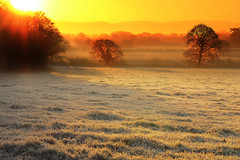 Fields of Gold (Idreamofpies) Tags: sunrise morning frost start day fields gold sun light trees grass shadow silouhette saighton chester cheshire uk england gb weather cold