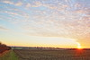 Sunset Over the Field (LookingForLife) Tags: sunset sky england wiltshire countriside pretty colour field wild natural nature