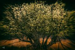 Brash (m8oxy) Tags: harsh brash tree motion blurr dark sinister horror