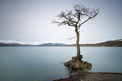 The Tree (strachcall) Tags: water longexposure lochlomondtrossachs landscape scotland tree lochlomond milarrochybay
