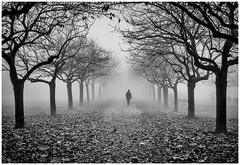 boulevard of broken dreams (Petricor Photography) Tags: milan milano street fog people person walking trees nature park canonpersonalconnection city winter wintery foggy black white blackandwhite and