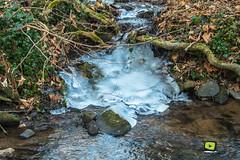 Obernai-25 (valdu67photographie) Tags: 2017 alsace arbre basrhin blanc d7200 eau faune forêt glace hiver montagne nature nikon nikond7200 obernai paysage valdu67photographie vignes ville