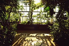 You don't know who is on their way to meet you... (catarinae) Tags: you have no clue who is their way meet they dont know either botanic garden berlin deutschland germany plants window shadows