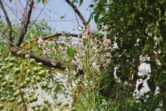 Blomster (Benny Hnersen) Tags: holiday greece griechenland ferie sivota syvota 2015 augsut grkenland