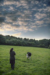 Ferdinand (rmrayner) Tags: field evening countryside cow pasture day251 365project 251365 365the2105edition timidbullock