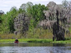 Paddling (jameskirchner15) Tags: kayaking florida rivers water paddling trees spanishmoss outdoors outdoorsports watersports adventure sunshinestate