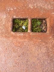 Mose i rust -|- Moss & rust (erlingsi) Tags: erlingsi iphone rust rusty mose moss folkestad minimal explored080915 explored rouille camphone kameramobil flickr